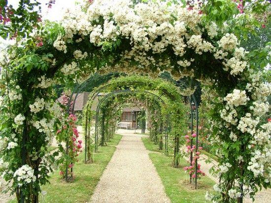 Фото - Арки для саду з квітів: гідне прикраса ділянки