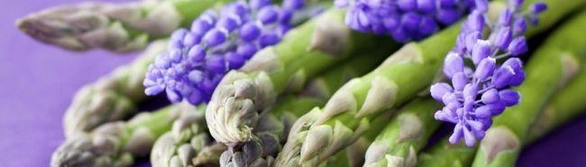 Фото - Аспарагус - овочева культура