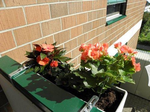 Фото - Балконні квіти - які краще вибрати