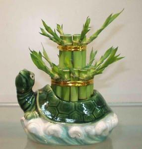бамбук фен шуй