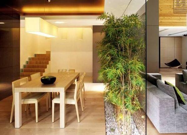 Фото - Бамбуковий гай у вашій квартирі