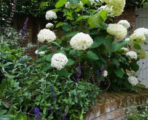 білосніжні квіти