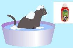 Протиблошині обробка домашніх тварин