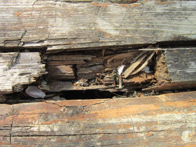 Фото - Боротьба з гниттям деревини за допомогою антисептиків