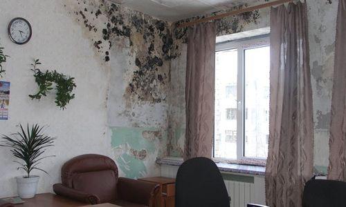 Фото - Чим і як знищити цвіль на стінах будинку