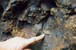 Мигдалини агата в базальті