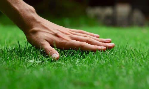 Фото - Що потрібно знати про газоні і який витрата насіння для нього?