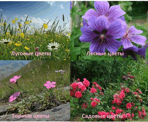 Фото - Квіти для присадибної ділянки