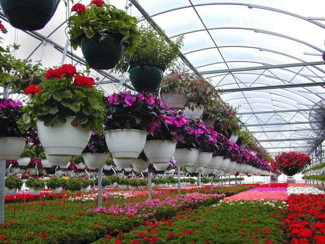 Фото - Квіти на присадибній ділянці: від тюльпанів до хризантем