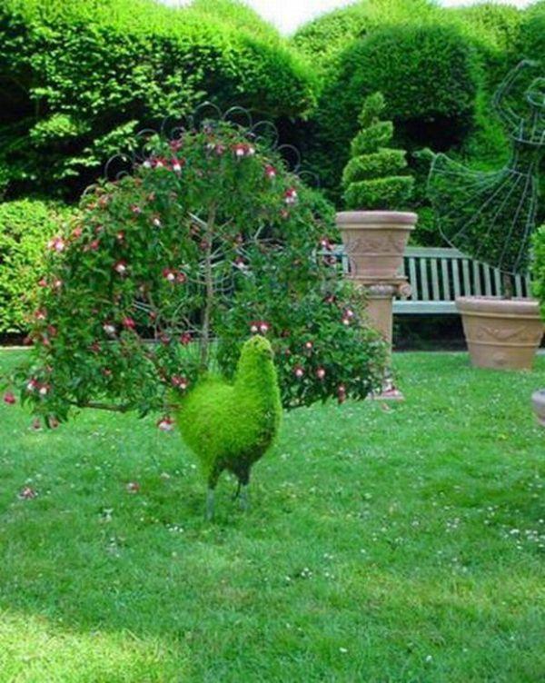 декоративні чагарники для саду