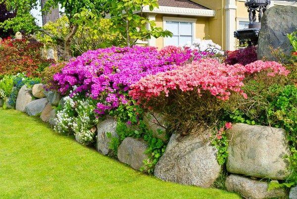 Квітучі чагарники для дачі та саду фото