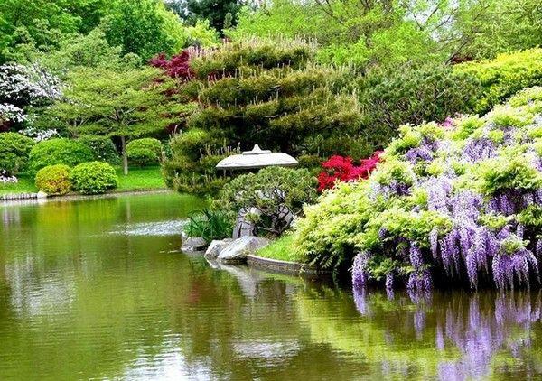 Красиві декоративні дерева і чагарники для саду