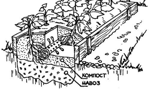 Фото - Дерев'яні грядки короба: переваги використання, облаштування