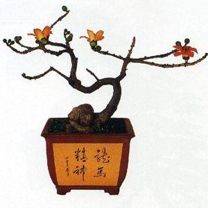 Фото - Дерево бонсай в навчанні фен шуй