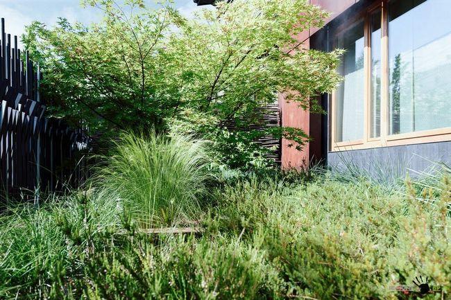 Велика кількість зелені у дворі