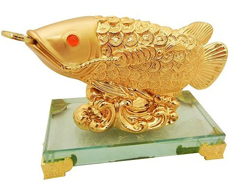 Золота рибка арована.