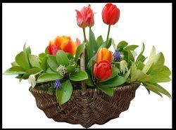 Фото - Фен шуй кімнатних квітів: краса і гармонія