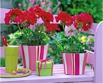 Фото - Фен шуй: рослини і любов