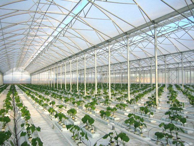 Фото - Фермерські тепличні конструкції