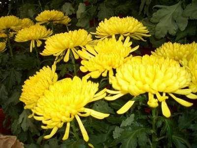 квіти в фен шуй