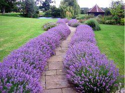 Фото - Фен шуй: квіти, що прикрашають садову ділянку