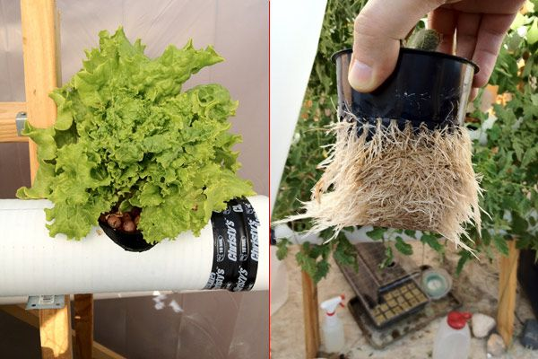 Фото - Гідропоніка і саморобки: ефективне вирощування