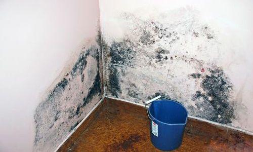 Фото - Грибок і пліснява на стінах приміщення