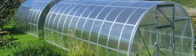 Фото - Ідеальні умови для томатів у теплиці