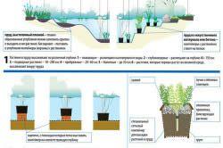 Схема штучної водойми на дачі