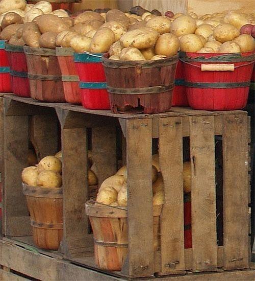 Картопля для зберігання