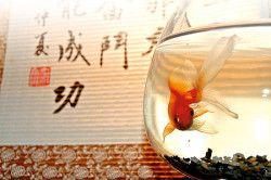Рибки по фен-шуй