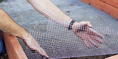 Фото - Ефективні способи боротьби з садовими мурахами