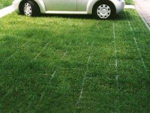 Фото - Екологічні парковки в місті