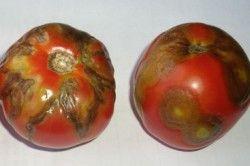 мозаїка томатів