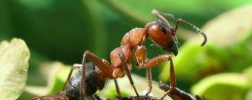 Фото - Як з теплиці вивести мурах