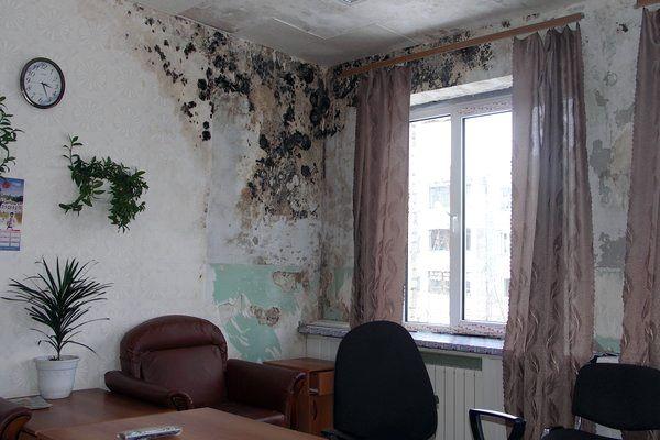 Цвіль на стінах кімнати