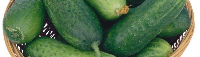 Фото - Як можна вирощувати огірки