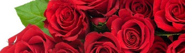 Фото - Як на дачі виростити троянди