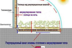 Схема біологічного обігріву теплиці