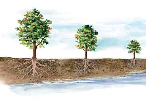 Рослини і грунтові води