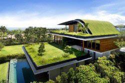 Зелена покрівля