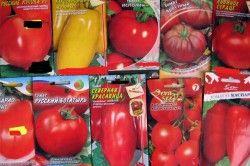 Різновиди сортів помідор
