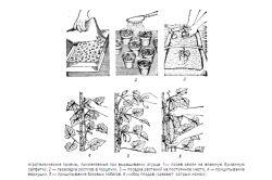 Фото - Як правильно робити обрізку огірків, зростаючих в теплиці