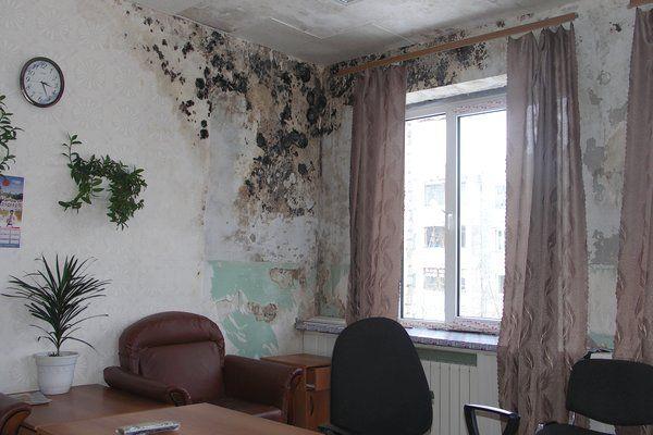 Фото - Як правильно і швидко очистити стіни від цвілі