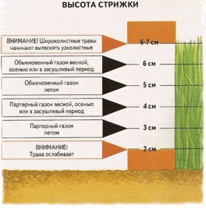 Фото - Як правильно оформити газон на присадибній ділянці