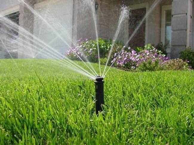Як правильно поливати газони