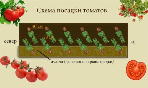 Схема посадки томатів