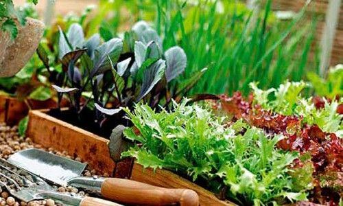 Фото - Як правильно садити зелень на дачі?