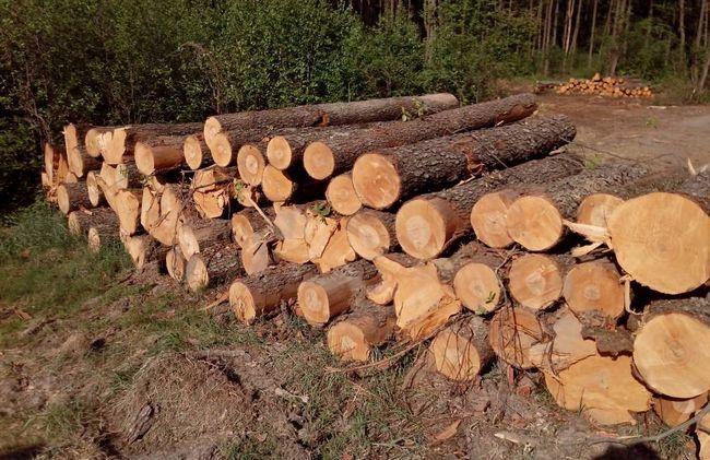 Фото - Як правильно сушити деревину?