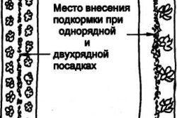 Схема підгодівлі огірків.